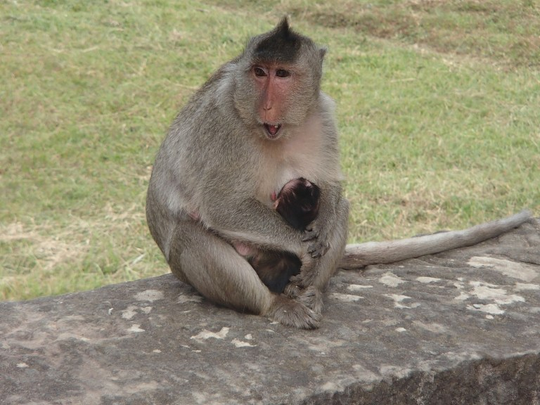 Mummy monkey and baby